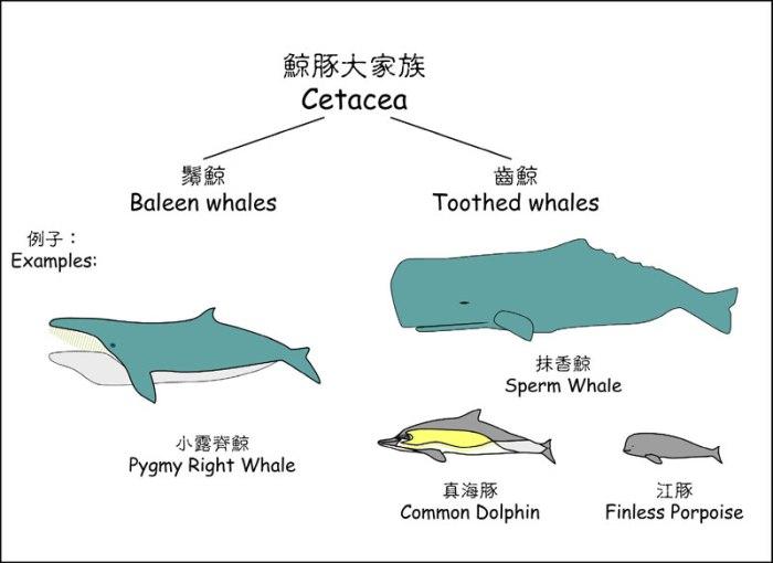 cetacean_family
