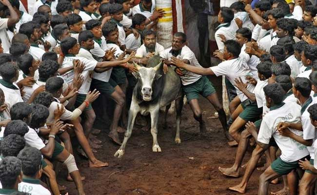 jallikattu-tamil-nadu-reuters_650x400_81485173488
